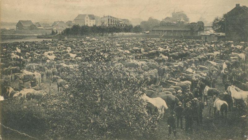 Cranger Pferdemarkt, um 1903, Foto Stadtarchiv Herne