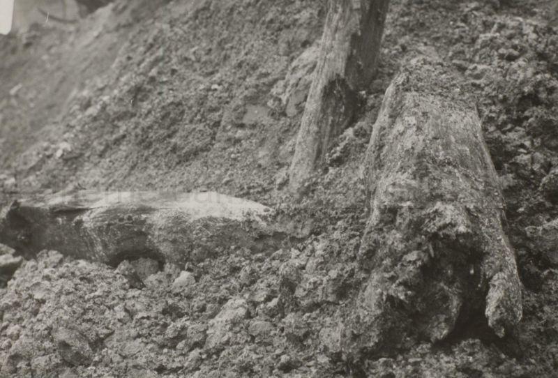 Freigelegte Fundamente der Dorneburg, März 1957, Foto Stadtarchiv Herne